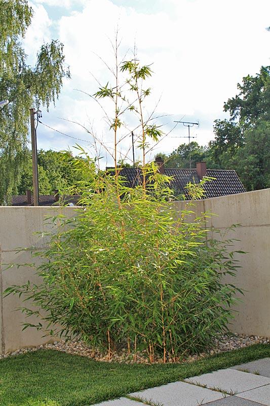 Bambus Erfroren Garten Allgemein Forum Von Petra Kaiser De