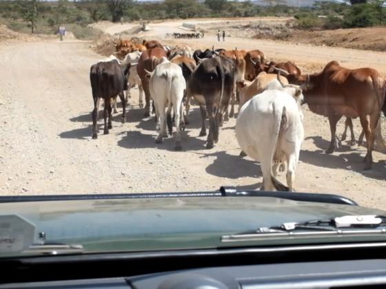 Von der Masai Mara nach Nairobi 2