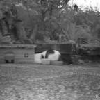 Katzen am Igelhaus