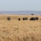 Masai Mara -Elefanten