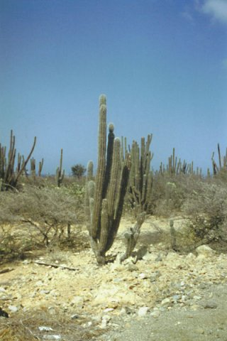 phoca_thumb_l_Aruba_06.jpg