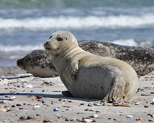 Tiere auf Helgoland